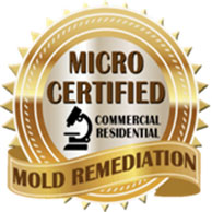 Mold Remediation Chester NJ, New Jersey