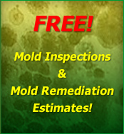 Mold Removal Tinton Falls NJ, New Jersey