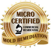 Mold Inspection West Creek NJ 08092