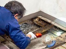 Basement Mold Removal Atlantic County NJ Mold Remediation Basement Mold Testing Atlantic County NJ Mold Inspection Basement