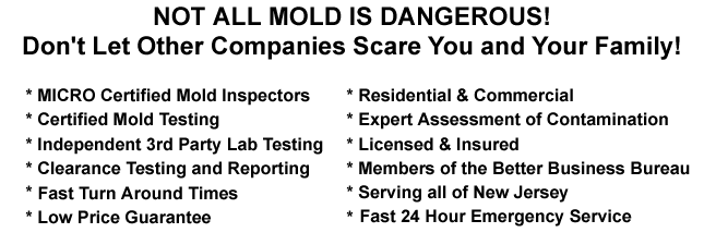 Basement Attic Mold Inspection Atlantic County NJ Mold Removal Attic Mold Remediation Atlantic County NJ Mold Testing Attic Basement